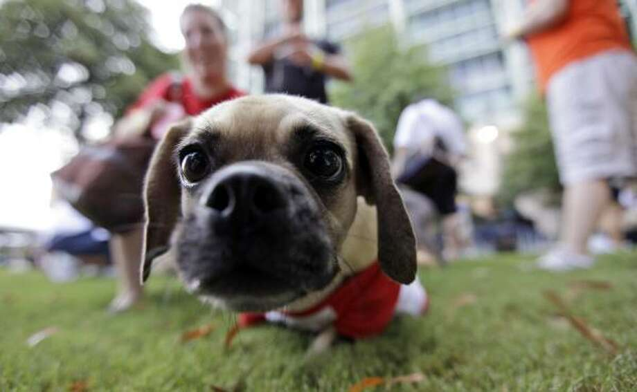 Machi waits with her owner Shannon McGowan, left, outside Minute Maid Park before the start of the Astros game. Photo: David J. Phillip, AP
