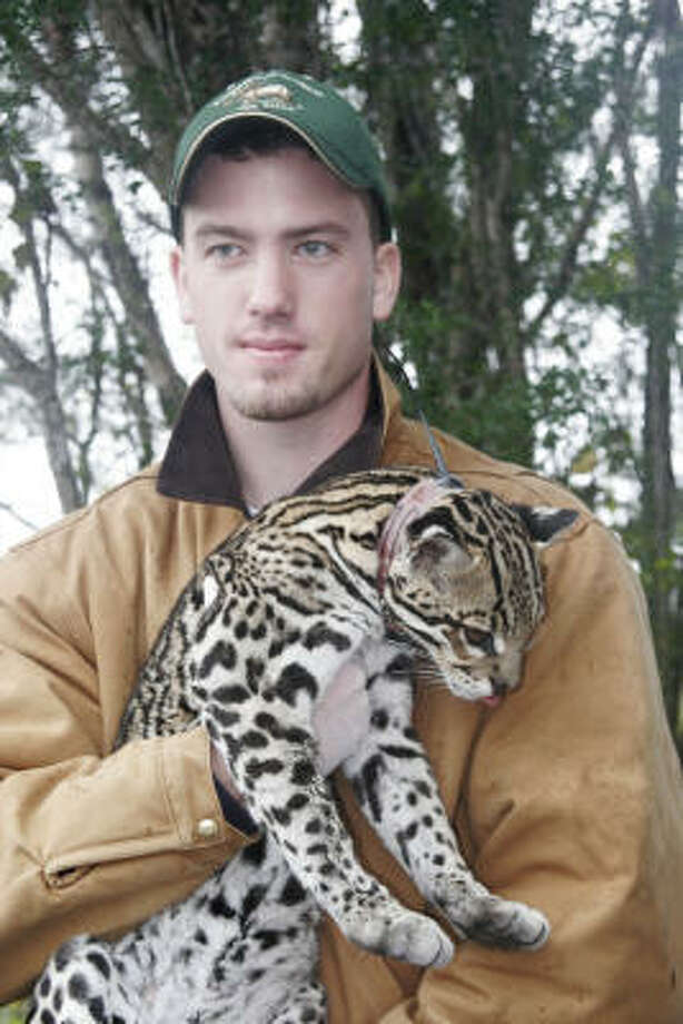 Joe Holbrook, a researcher at Caesar Kleberg Wildlife Research Institute, holds a radio-collared ocelot. Photo: Shannon Tompkins, Chronicle
