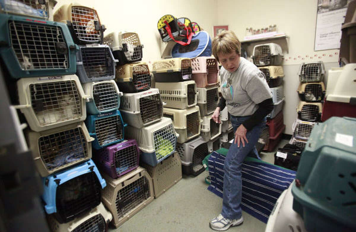 Volunteer Kate Brusegaard looks after the male cats waiting to be neutered at the Houston Humane Society. According to the Houston Humane Society, for every 10,000 humans born, there are 70,000 puppies and kittens born.