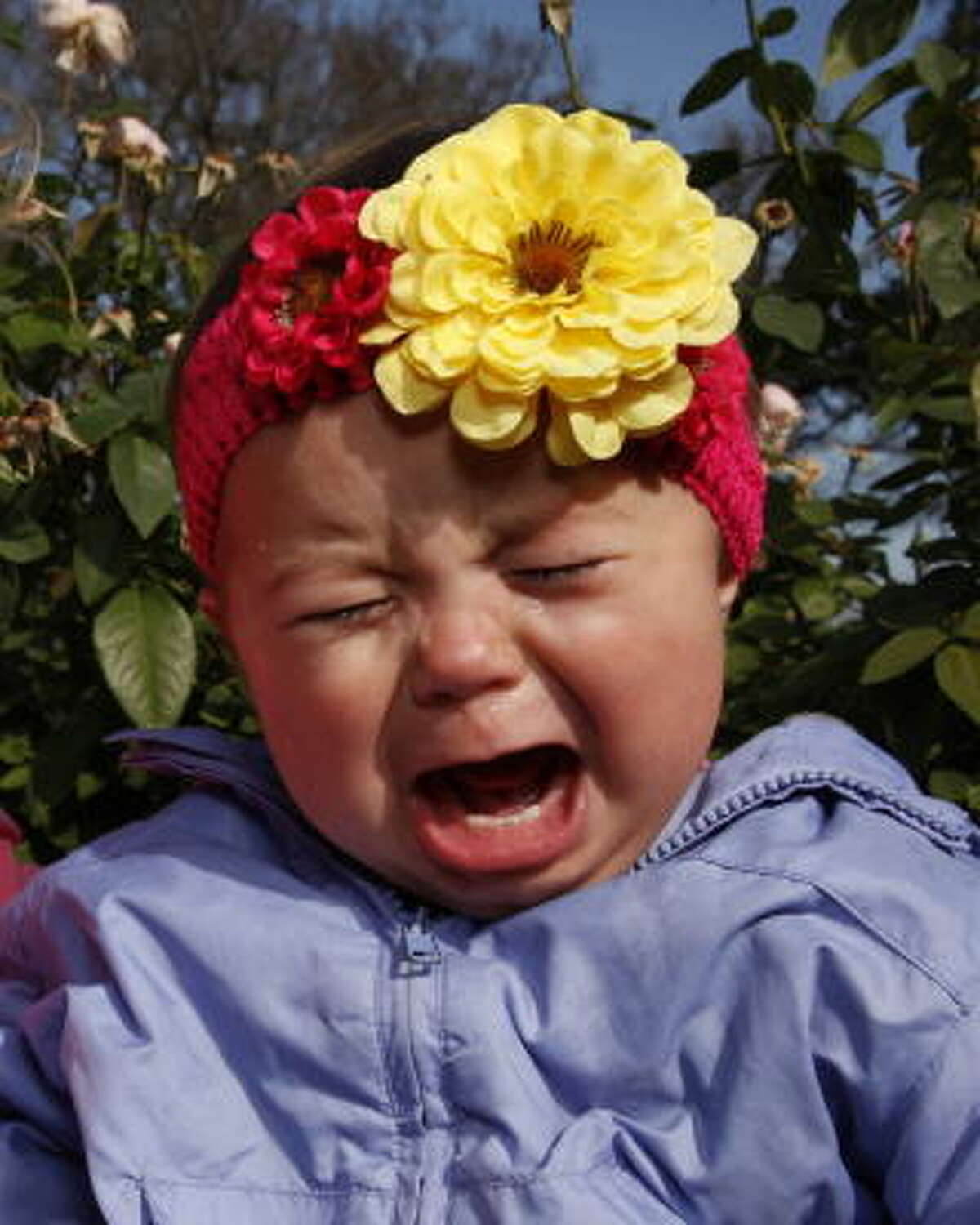 Eleanor, not having a good time on picture day! by jklentzmanTo share pictures of your kid, visit the My Kid gallery.