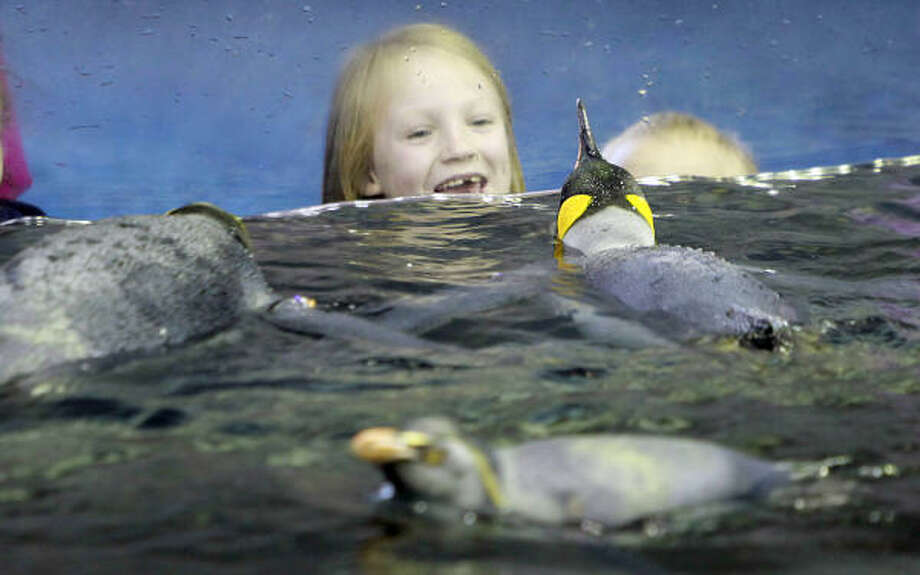 Alayna Virnau smiles at King Penguins swimming in the cold water at  their exhibit. Photo: Mayra Beltran, Chronicle