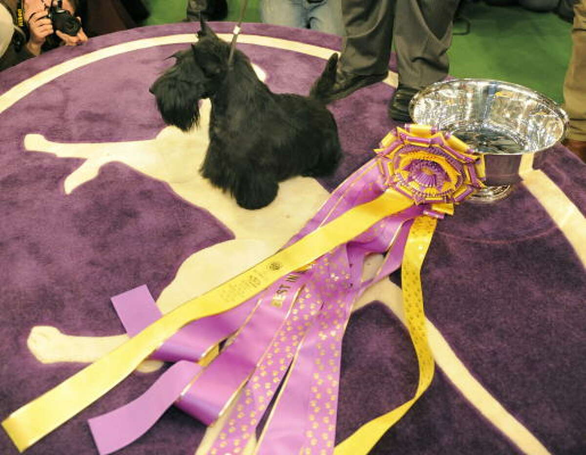 Scottish Terrier Sadie poses for the press after winning Best in Show at the 134th Westminster Kennel Club Dog Show.