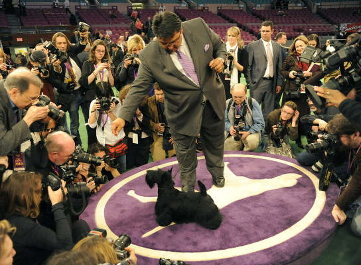 Scottish Terrier Sadie poses for the press with handler Gabriel Rangel after winning Best in Show at the 134th Westminster Kennel Club Dog Show.