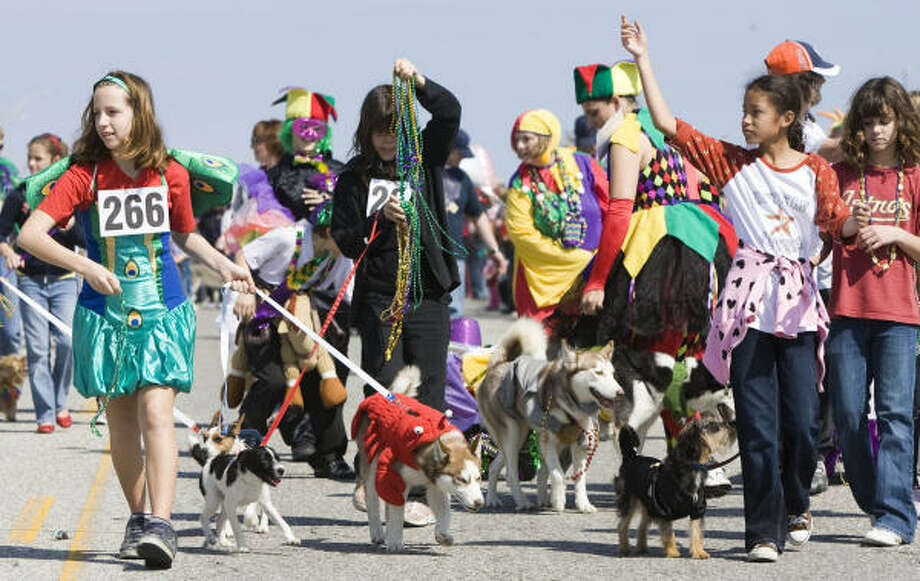The annual Krewe of Barkus and Meoux Mardi Gras parade added extra color to Seawall Boulevard Sunday in Galveston. Photo: Brett Coomer, Chronicle
