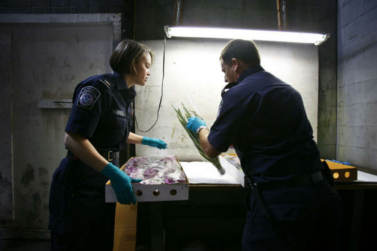 U.S. Customs and Border Protection Ag Specialists, Jennifer Murrell and Stephen Morris, look at a shipment of imported Orchids from Thailand for any signs of insects, diseases, or arthropods that could potentially threaten U.S. agricultural crops and native ecosystems at Bush Intercontinental Airport.