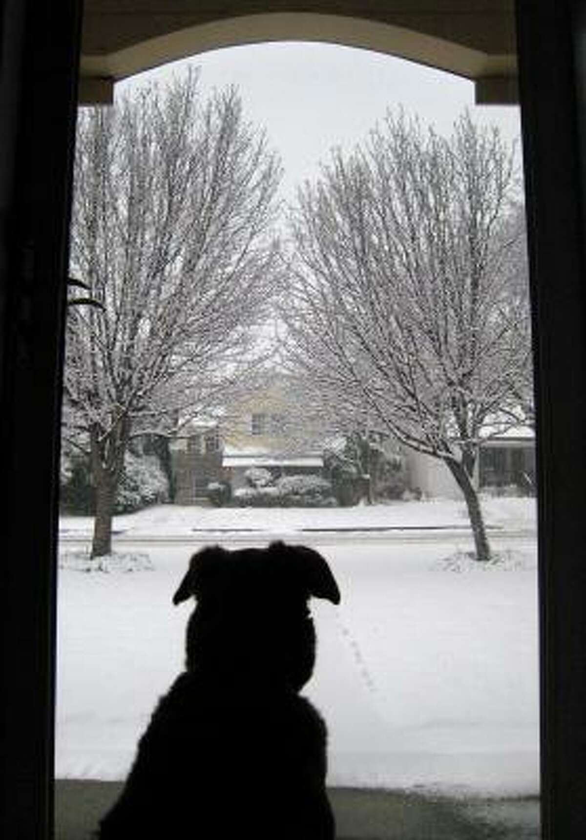 Ellie gazes out the door at her snow covered yard in Fort Worth, Texas.