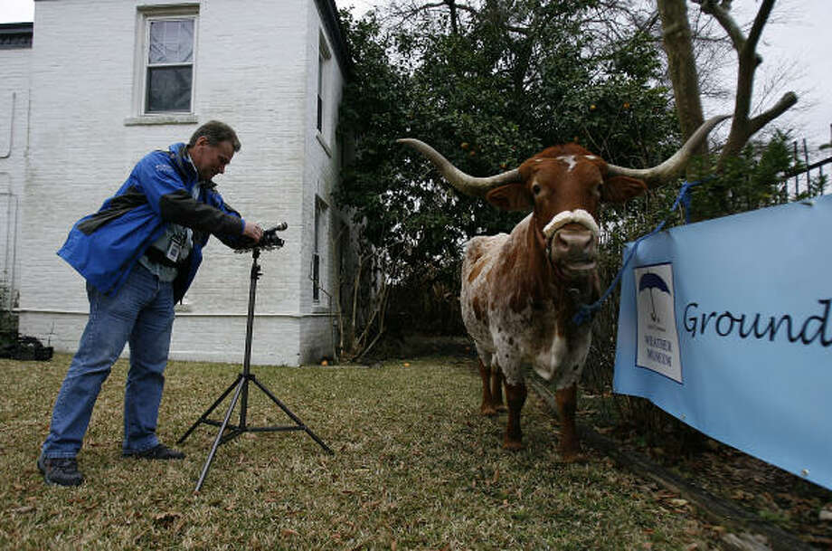 KIAH 39 News Photographer Steve Ottesen, sets up a microphone before Alamo, the longhorn, made his weather prediction on Groundhog Day at the John C. Freeman Weather Museum. Alamo, substituting for a groundhog, predicts an early spring. Photo: Johnny Hanson, Chronicle