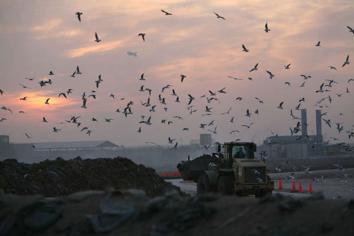 Birds flock around a tractor moving trash into a burn pit at Camp Taji, in Iraq where hundreds of soldiers from the 72nd Infantry Brigade Combat Team live and work. The soldiers complain of headaches, coughs, and sore throats, irritated eyes and skin rashes.