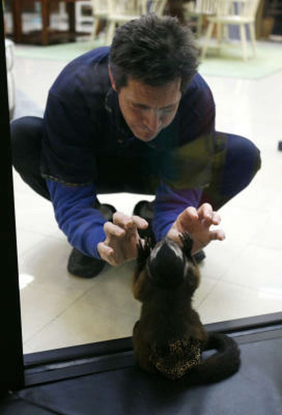 Houston, inside the monkey enclosure in the store, plays with employee Matt Pitcher.