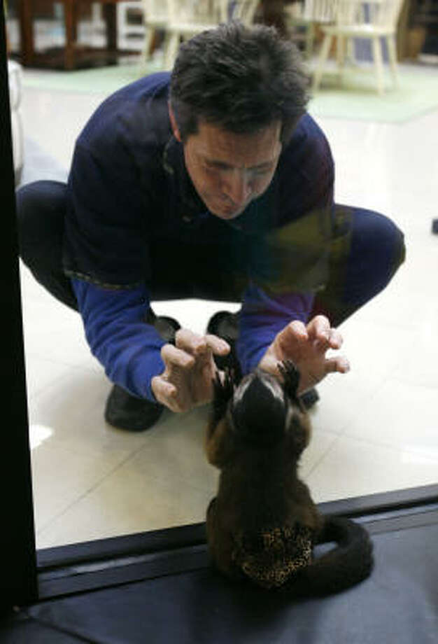 Houston, inside the monkey enclosure in the store, plays with employee Matt Pitcher. Photo: Karen Warren, Chronicle