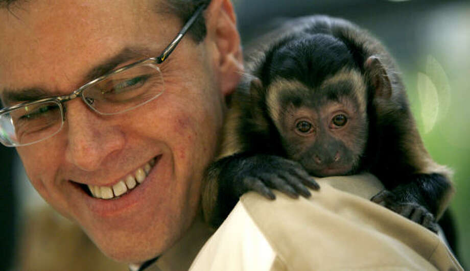 At night the monkeys go home with Robert Williams or the McIngvales. Photo: Karen Warren, Chronicle
