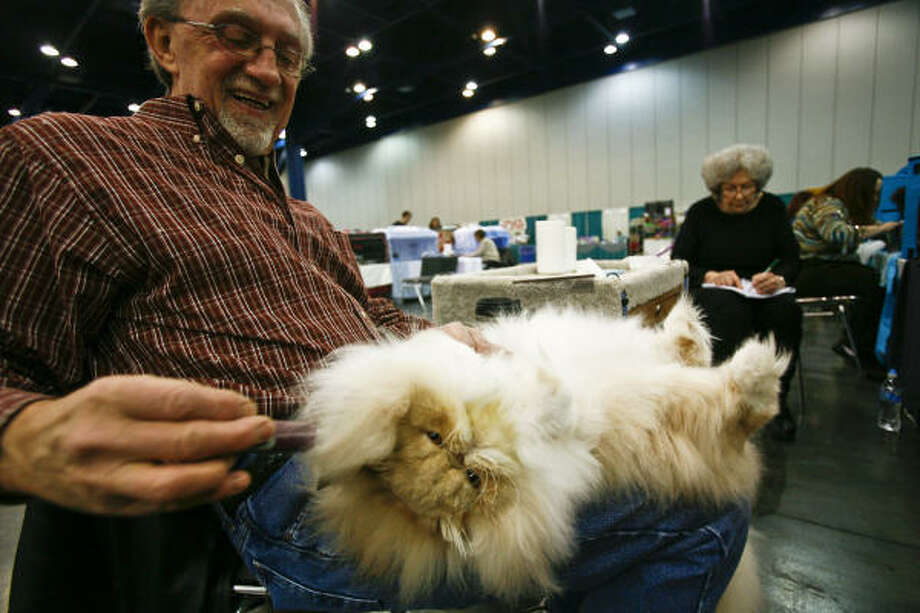 Jack Nichols holds his Persian cat, named Player, before the Houston Cat Club's 58th Annual Charity Cat Show at the George R. Brown Convention Center. Photo: Michael Paulsen, Chronicle