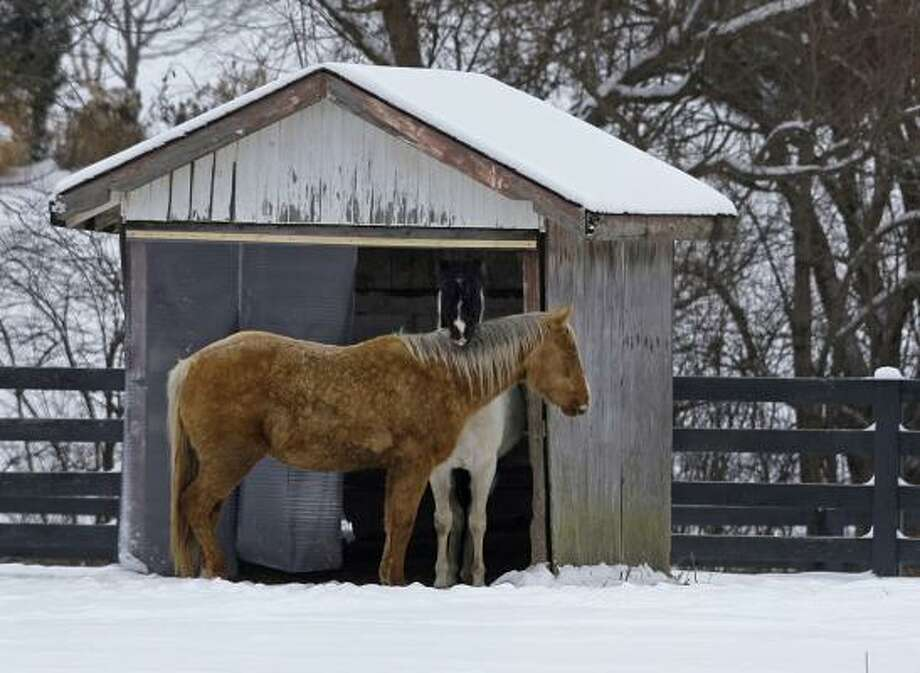 Horses seek shelter from the wind in a shed as they graze in a pasture in Carmel, Ind. Temperatures are expected to drop to near zero over the weekend in Central Indiana. Photo: Michael Conroy, AP