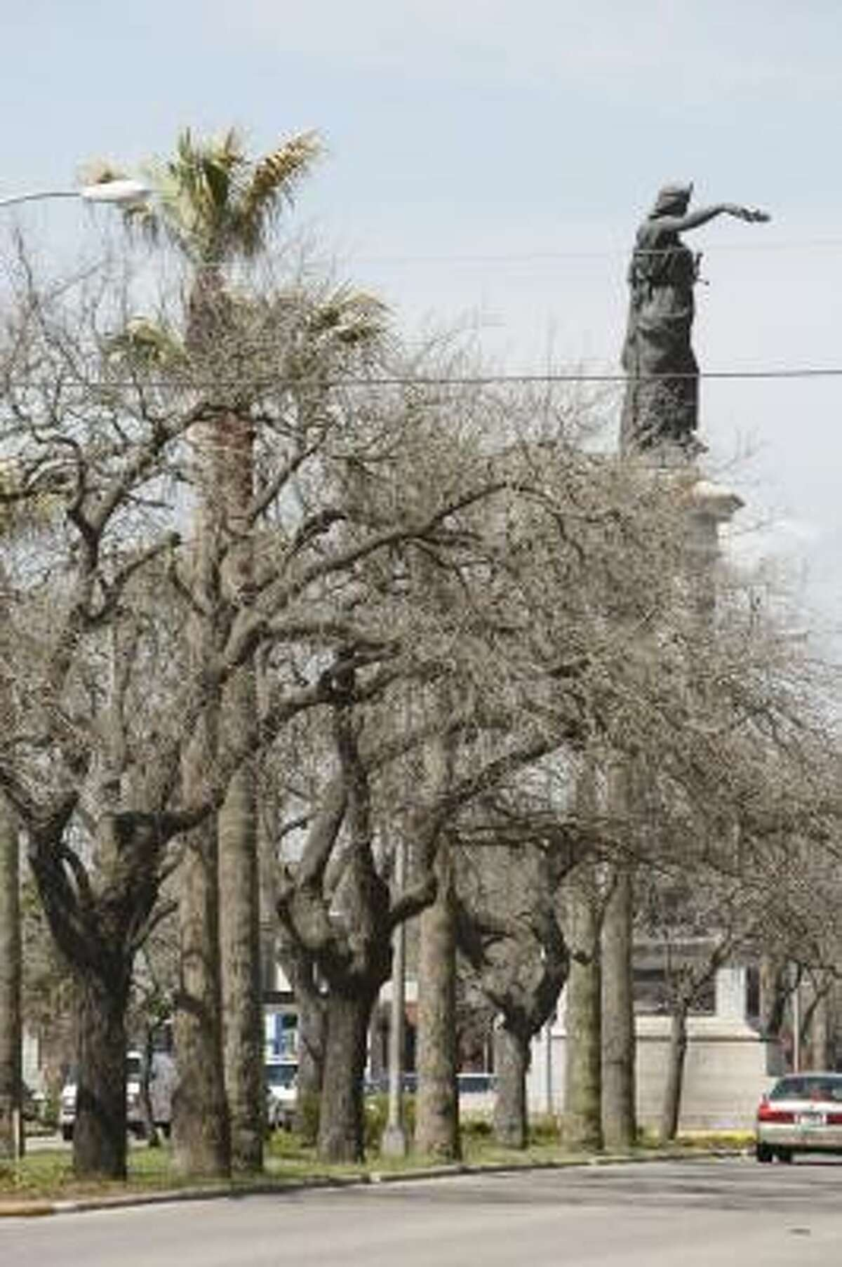 Several oak trees along Broadway were killed by Hurricane Ike's storm surge, including these photographed in April. The island lost as much as 80 percent of its tree canopy as a result of the Sept. 13 immersion in salty bay water, experts said today.