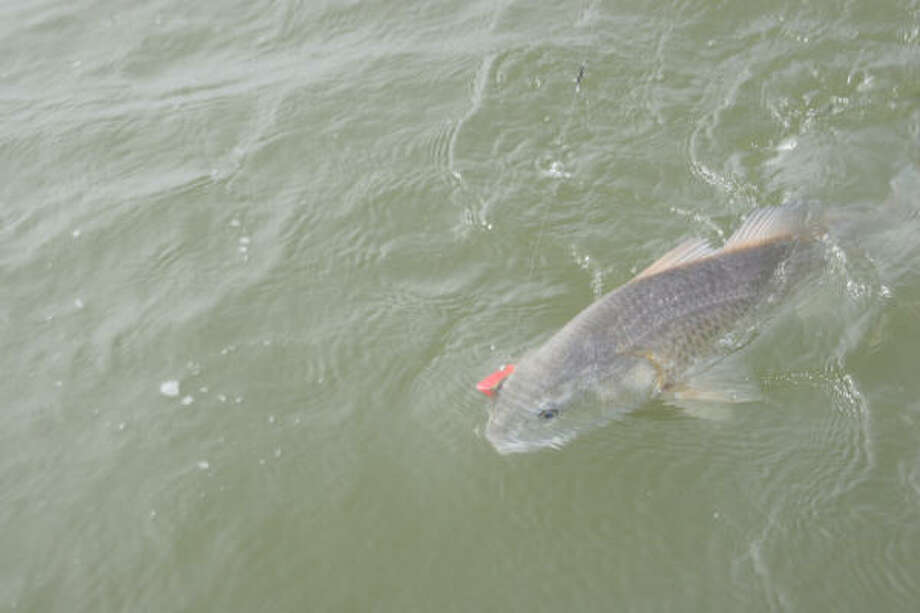 Tompkins fall 39 s high tides offers extra spots for anglers for Fishing spots in houston