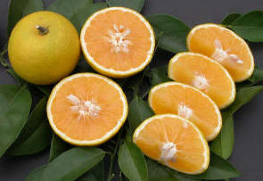 'Republic of Texas' oranges Photo: Treesearch Farms