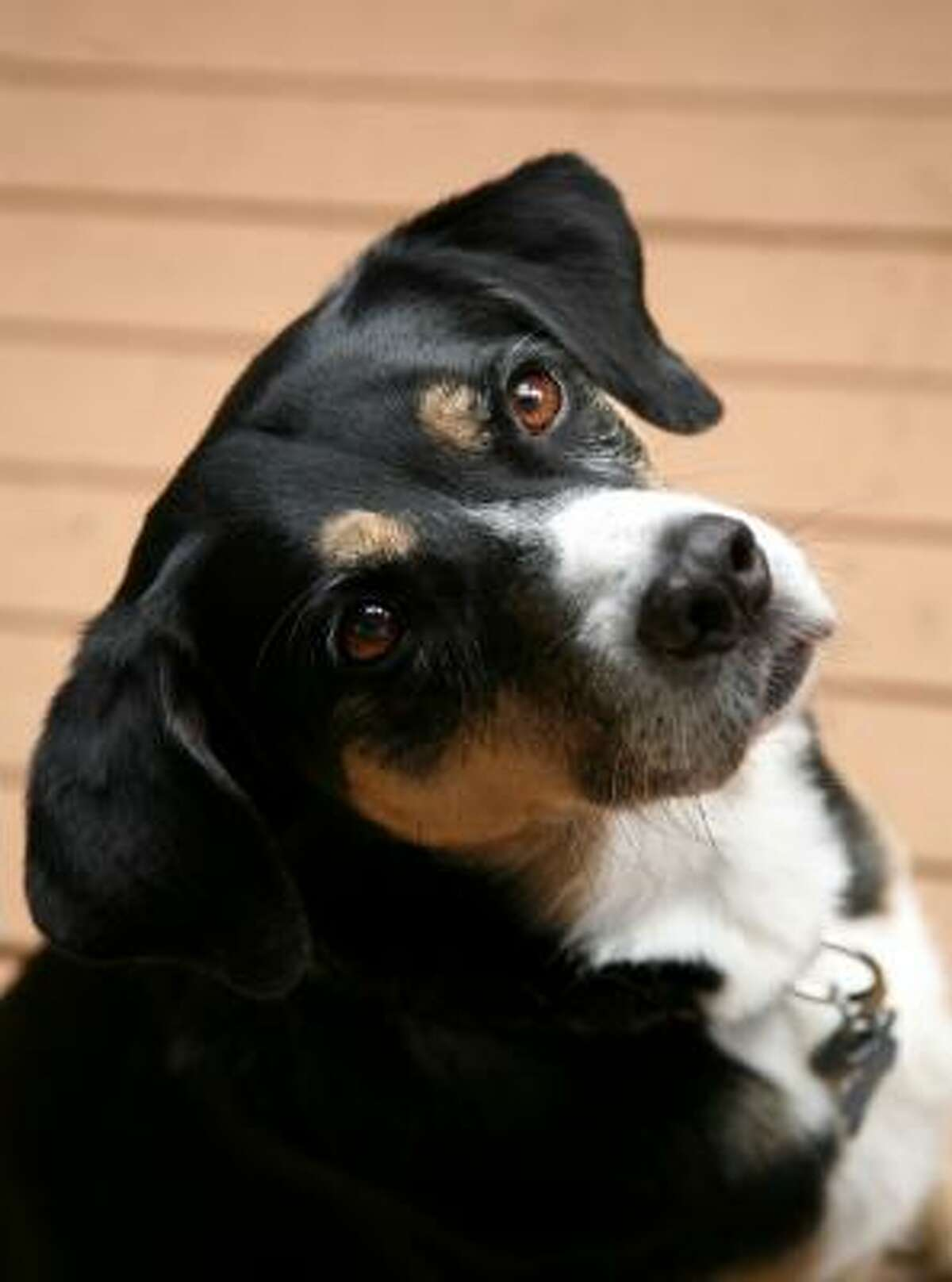 Some food colorings have been linked to seizures in dogs.