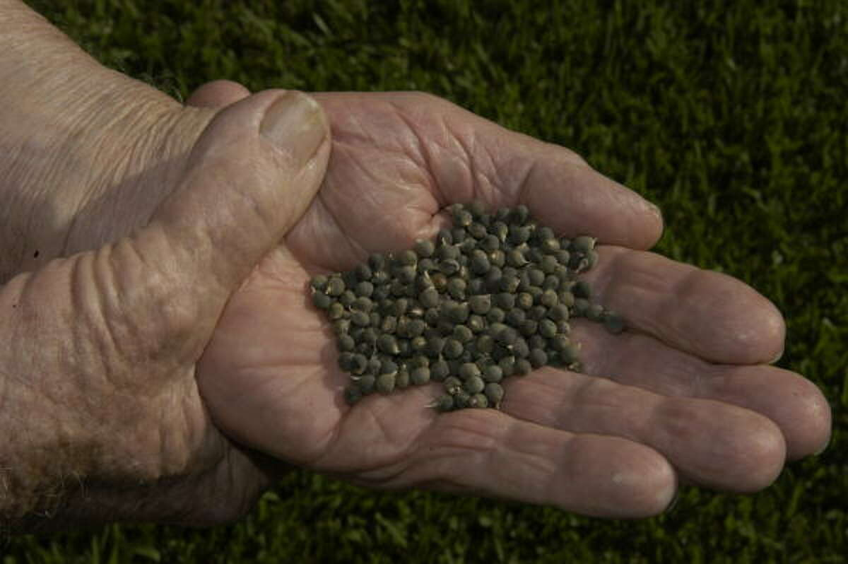 Okra seeds.
