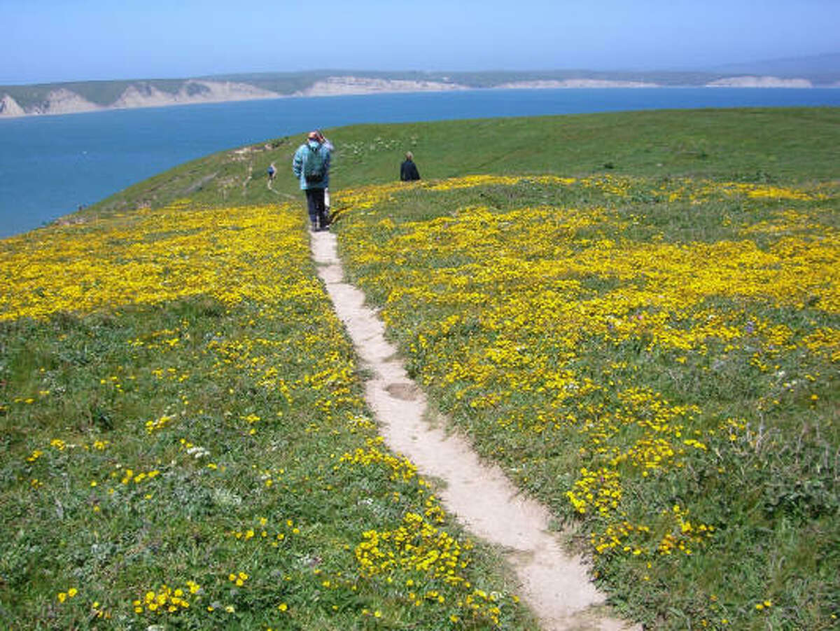 Point Reyes National Seashore in California is one of the top spots for wildflower hikes.