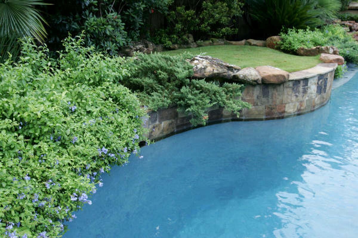 Blue plumbago and zoysia terrace around a Spring pool.