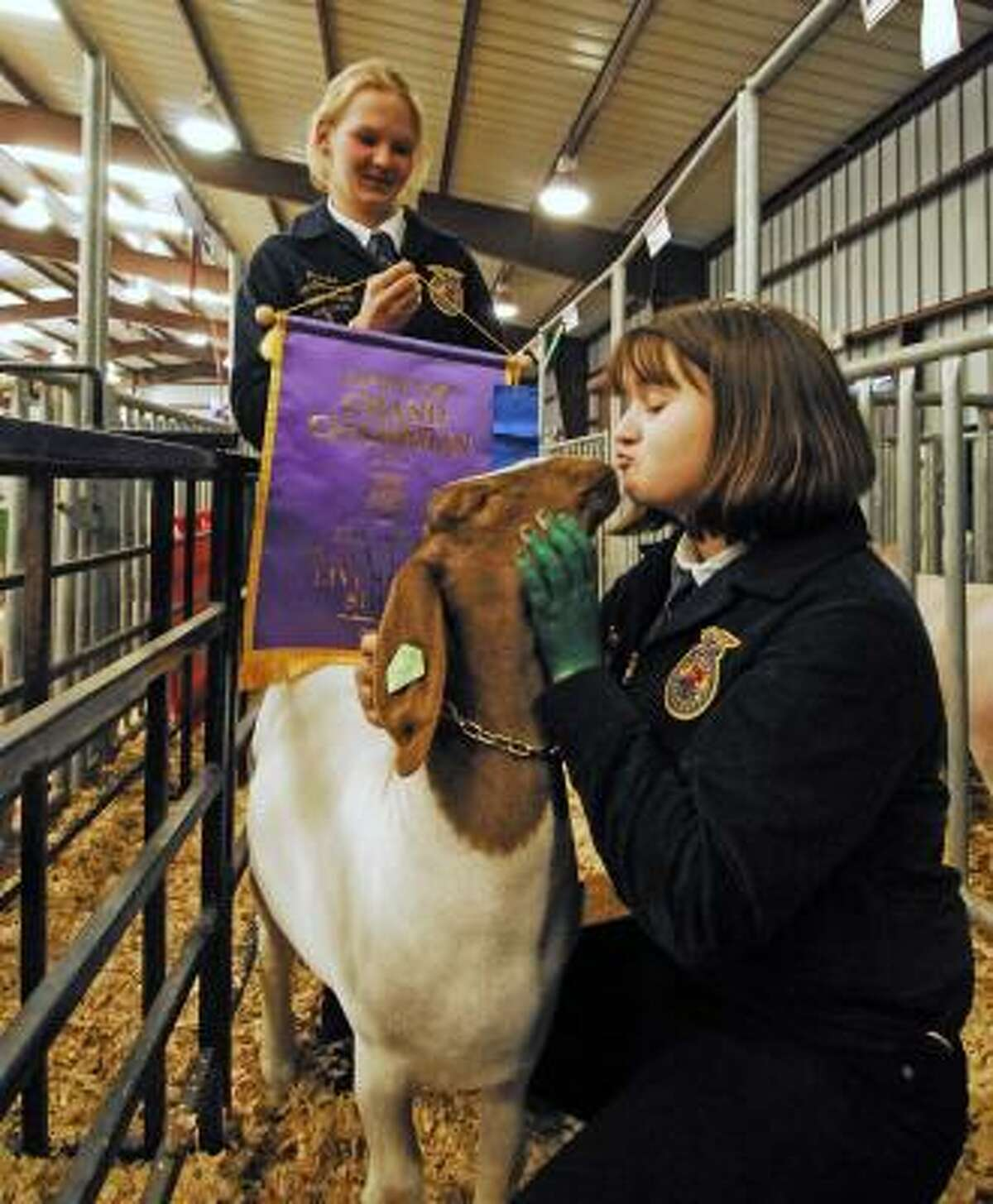 """Fifteen-year-old Cinco Ranch High School students Christine Van Oostendorp and Mandy Gulliver work with Mandy's Grand Champion goat """"Taco,"""" which was auctioned at the Katy Livestock show on Feb. 28."""