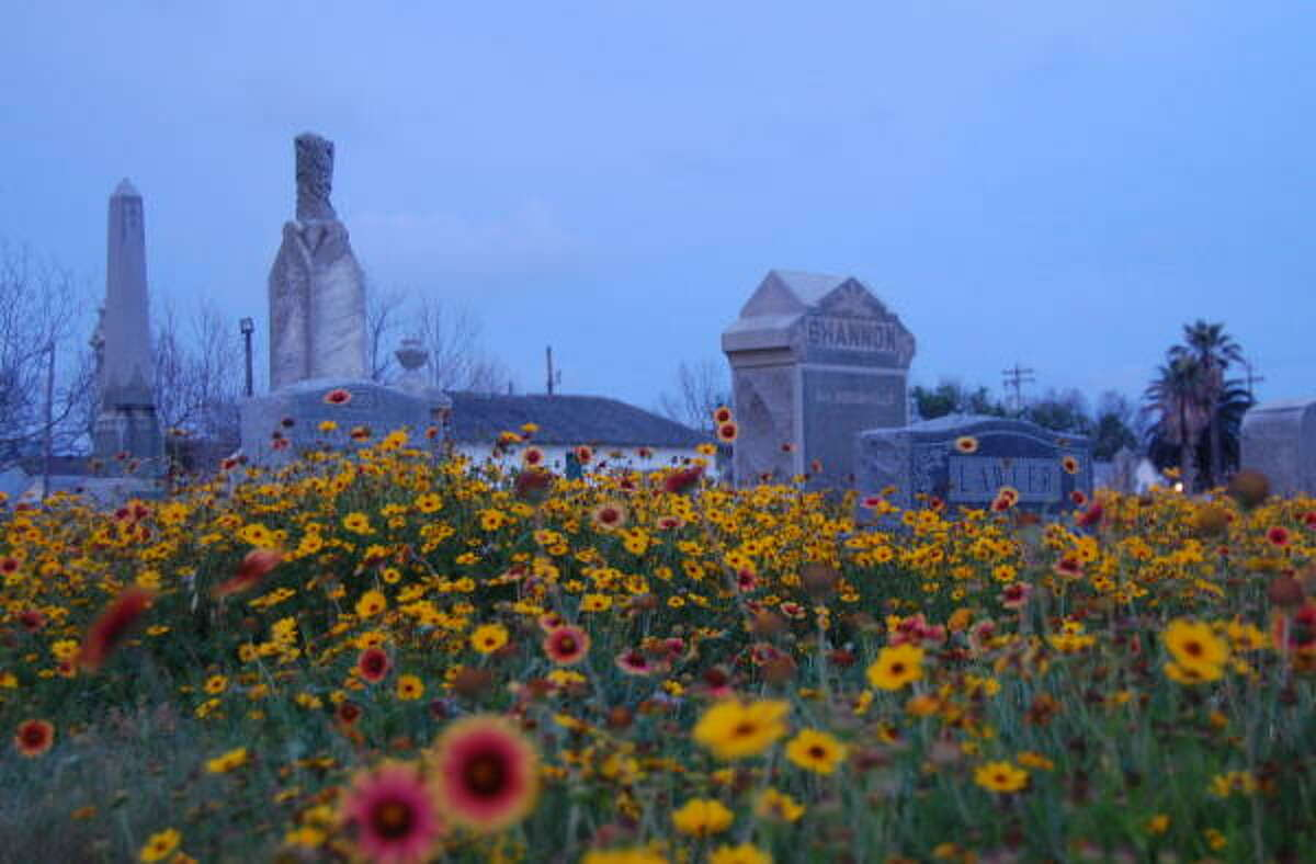 Coreopsis and Indian blankets fill Galveston's Old City Cemetery on Broadway at 43rd Street.