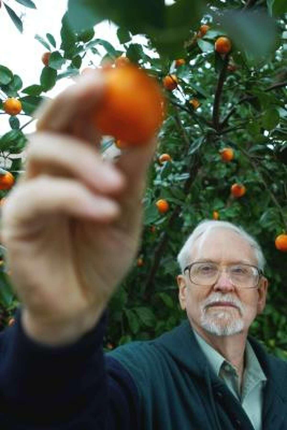 Bob Randall shows the fruit from his calamondin tree.