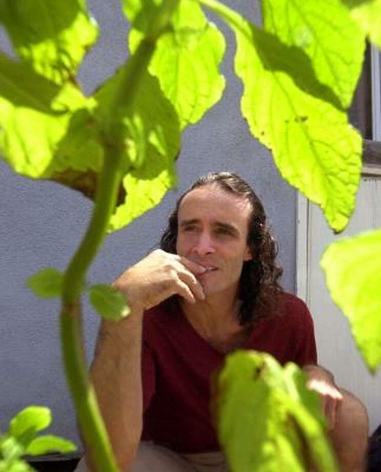 Botanist Daniel Siebert poses with a Salvia divinorum plant outside his California home. Photo: NICK UT, AP