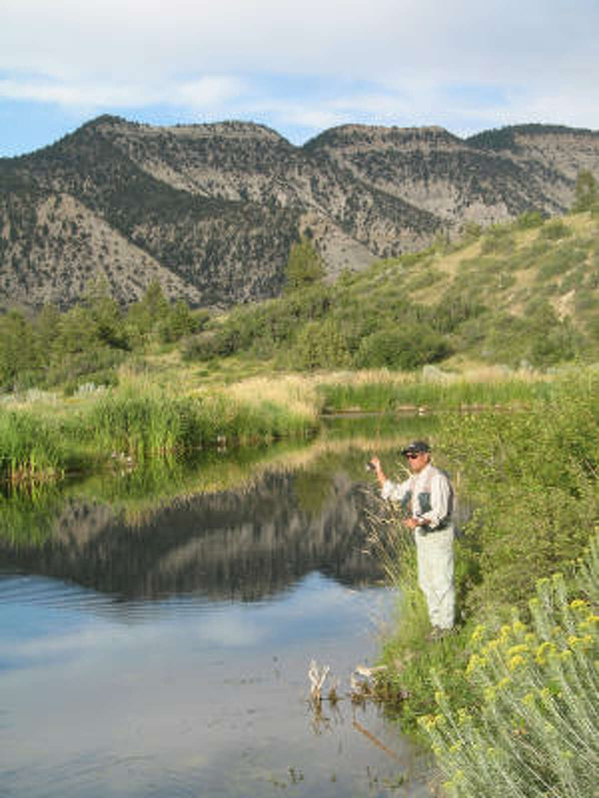 Joe Turano of Houston uses light bamboo rod and dry fly to cover rising trout on North Dry Fork on High Lonesome Ranch in Colorado.