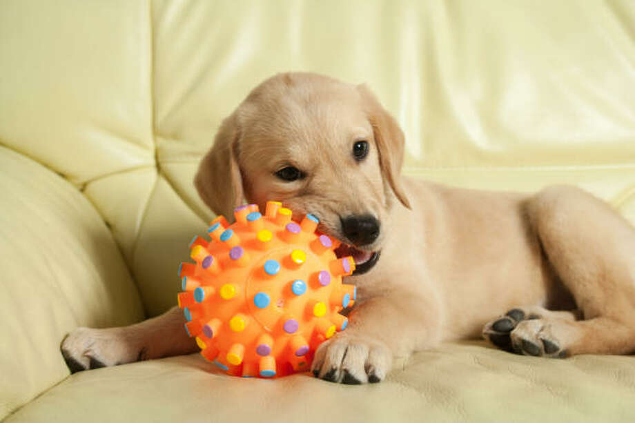 "Bill Rafferty recommends ""the basic big, hard toys"" made for dogs. Photo: Elisabeth Coelfen, Fotolia.com"
