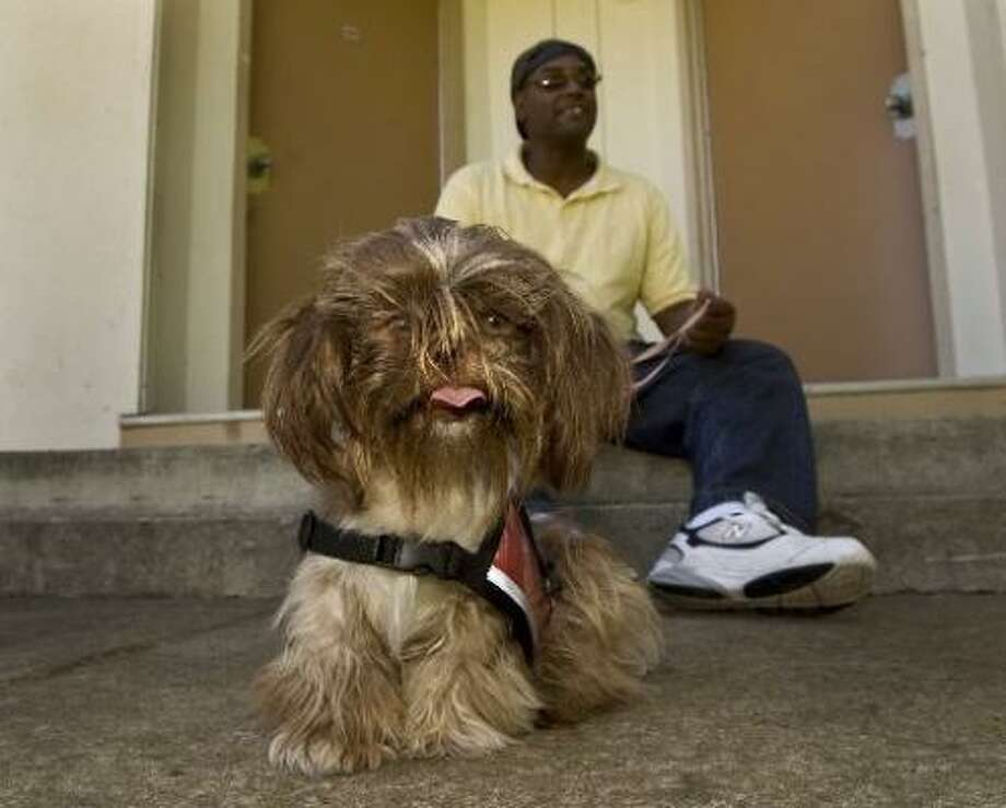 Tony Austin, a volunteer with Four Paws for Vets, meets Taffy, a Shih Tzu, for the first time in Sacramento, Calif. He and other residents of Mather Community Campus, a transitional living facility, were matched with dogs they will train for eight months. The dogs, many rescued from shelters, will be trained to turn on lights in dark rooms and keep people from sneaking up on the veterans. Photo: ANNE CHADWICK WILLIAMS, MCT