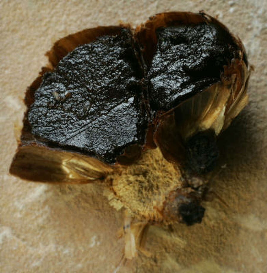 Black garlic adds trendy new flavors to restaurant menus. Photo: ED SUBA JR., Akron Beacon Journal | MCT