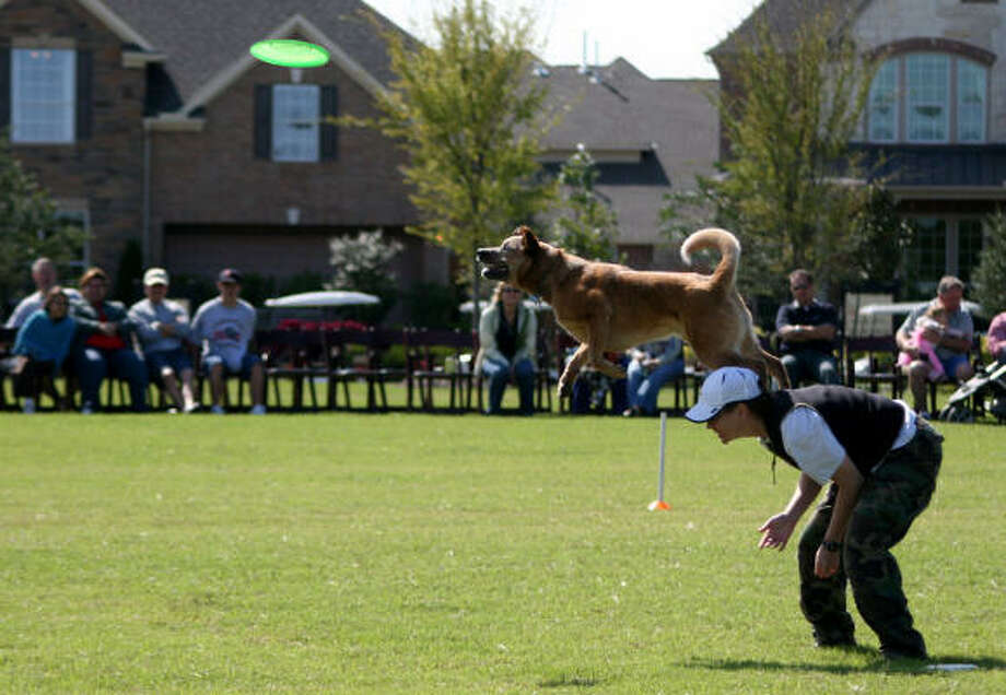 "OCT. 31 EVENT SET: A high-jumping pooch performs during a Houston Canine Frisbee Disc Club event at Bridgeland. With a pooch parade of costumed canines, Bridgeland is transforming kids' favorite candy-collecting holiday into a ""Howl-O-Ween"" celebration, 10 a.m. to 5 p.m. Saturday, Oct. 31. Headlining the family-and-Fido event will be the 2009 Space City Disc Dog Championship."
