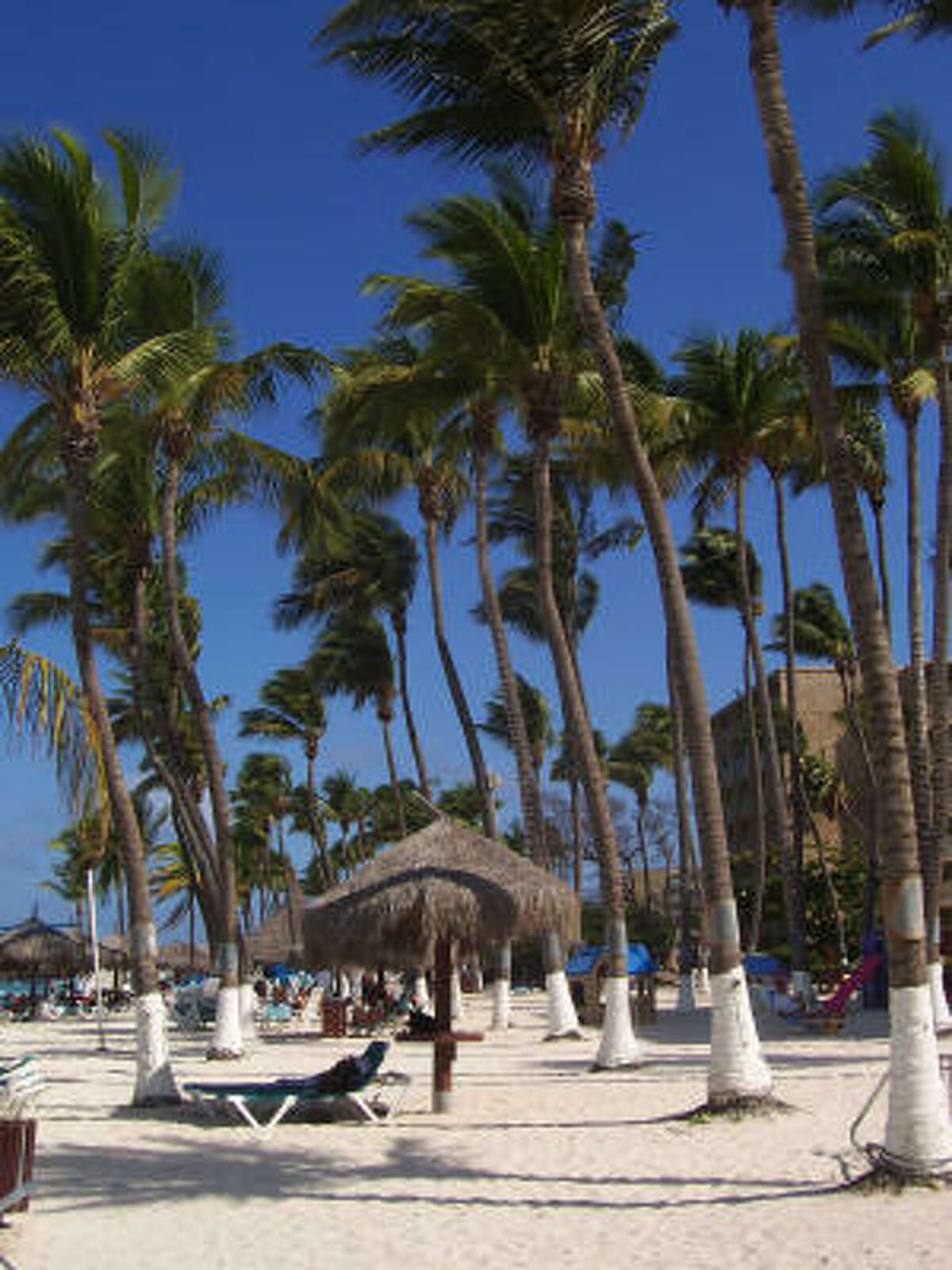ARUBA: The western shore is known for its sugary sands. Palm trees and the island?s large, high-rise hotels line the beach. The beaches are the biggest draw to the island, which is 19 miles long and six miles wide.