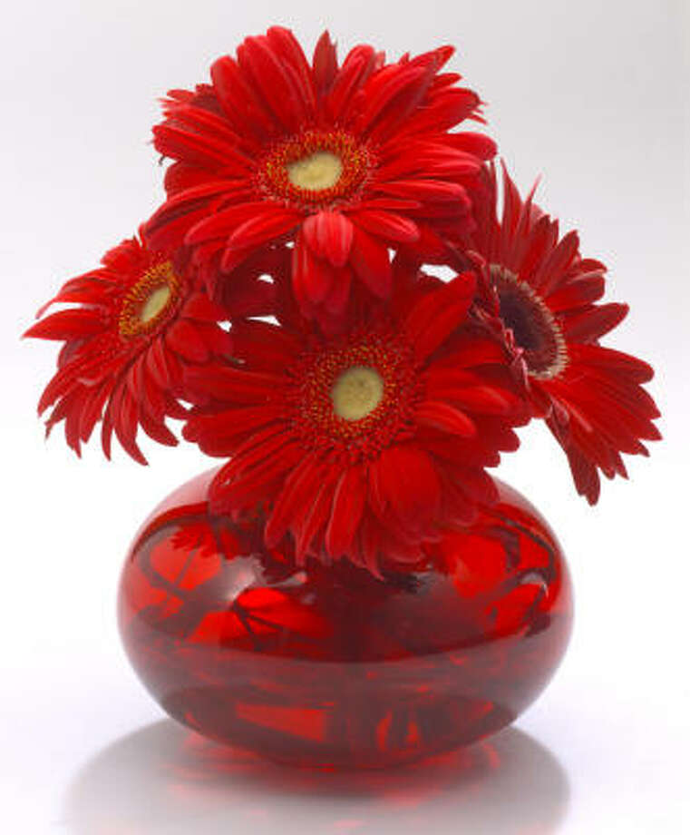 Red gerbera daisies Photo: RODOLFO HERNANDEZ, For The Chronicle