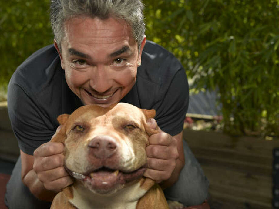 Cesar Millan, known as the Dog Whisperer, with Daddy. Daddy is a pit bull who belongs to rap performer Red Man. Daddy assisted in the televised rehabilitation of Oprah Winfrey's dog, Sophie. Photo: National Geographic Channel