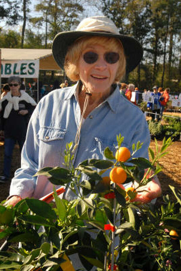 Kathryn Binney of The Woodlands admires a kumquat tree she purchased at the Montgomery County Master Gardeners spring plant sale in Conroe in 2006. Photo: David Hopper, For The Chronicle