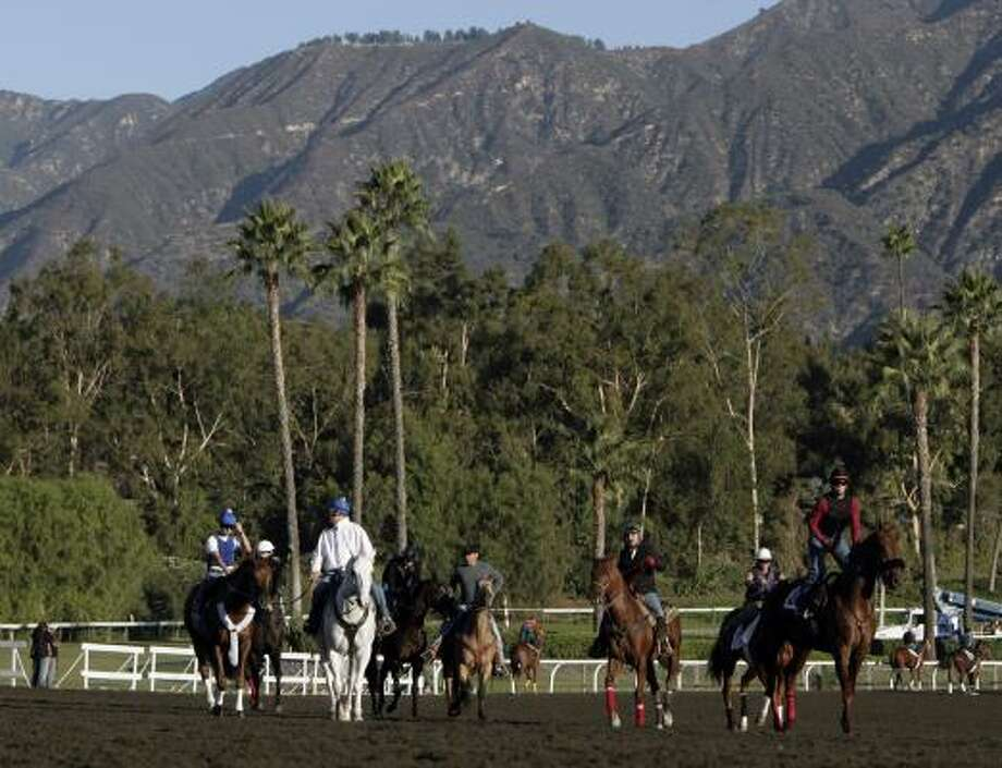 Most of the horses racing at the Breeders Cup at Santa Anita will race with furosemide in their systems. Photo: Ric Francis, AP