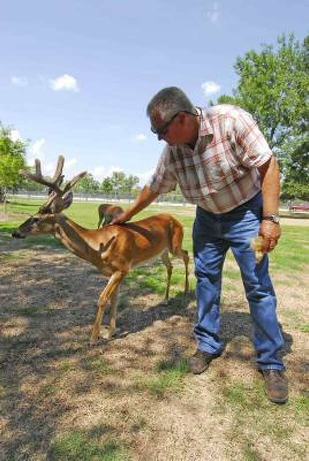 TAME AND HEALTHY: Mike McMann, Precinct 3 special activities coordinator, pets Doc the deer at Bear Creek Park. Photo: Tony Bullard, ALL