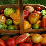 heritage a baker creek heirloom seeds catalog shows a basket with several varieties of