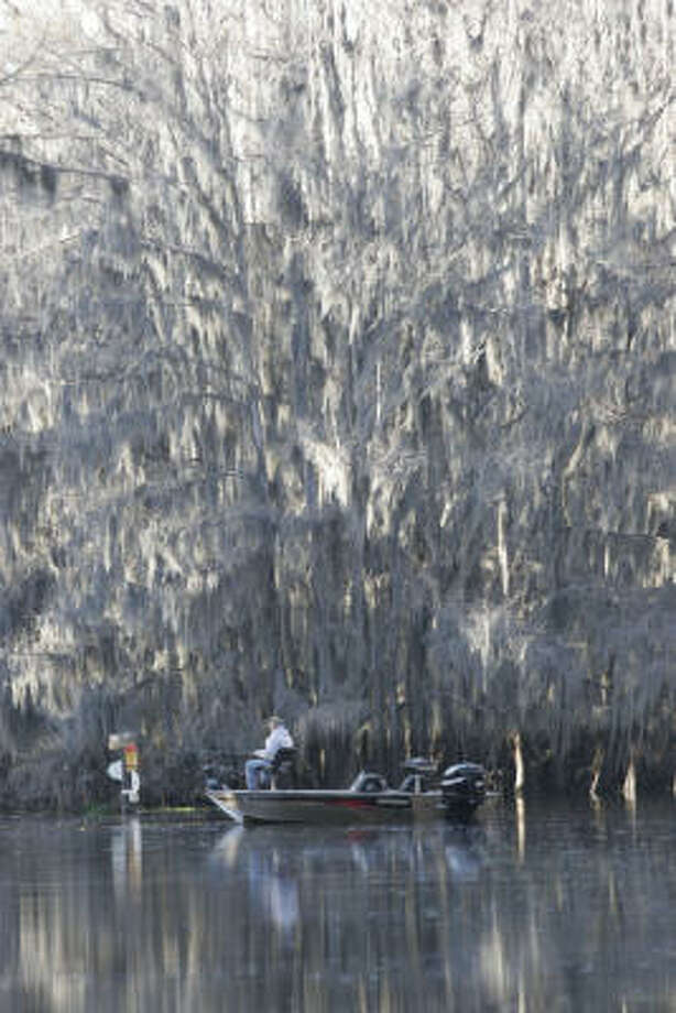 Caddo Lake's unique character, history and physical attributes such as its legions of moss-draped cypress trees make the waterway a Texas treasure. Photo: CHRONICLE FILE