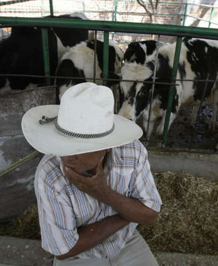 Natividad Lerma, 67, works on a ranch outside Leon in Guanajuato, Mexico, where dairy farmers are offering milk to wholesalers collectively so they can demand a higher price. Photo: Julio Cortez, Chronicle