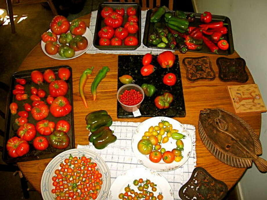 A great range of tomatoes and peppers can be grown from seed that is easy to save. Photo: Bob Randall, Urban Harvest