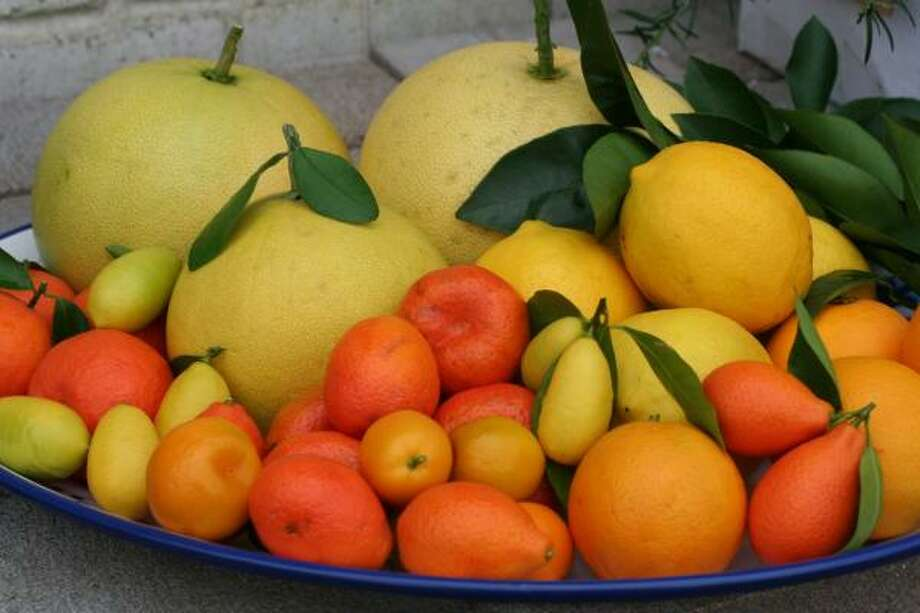 CITRUS' COLORFUL CORNUCOPIA: The variety of hardy citrus that can be grown in the Houston area is outstanding.