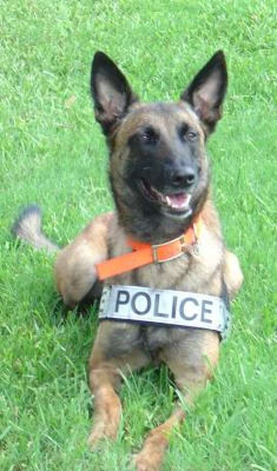 The Rosenberg Police Department recently filled its open position for a canine unit with Tayce Fontainedor, a 3-year-old Belgian Malinois, officials said. Photo: Rosenberg PD
