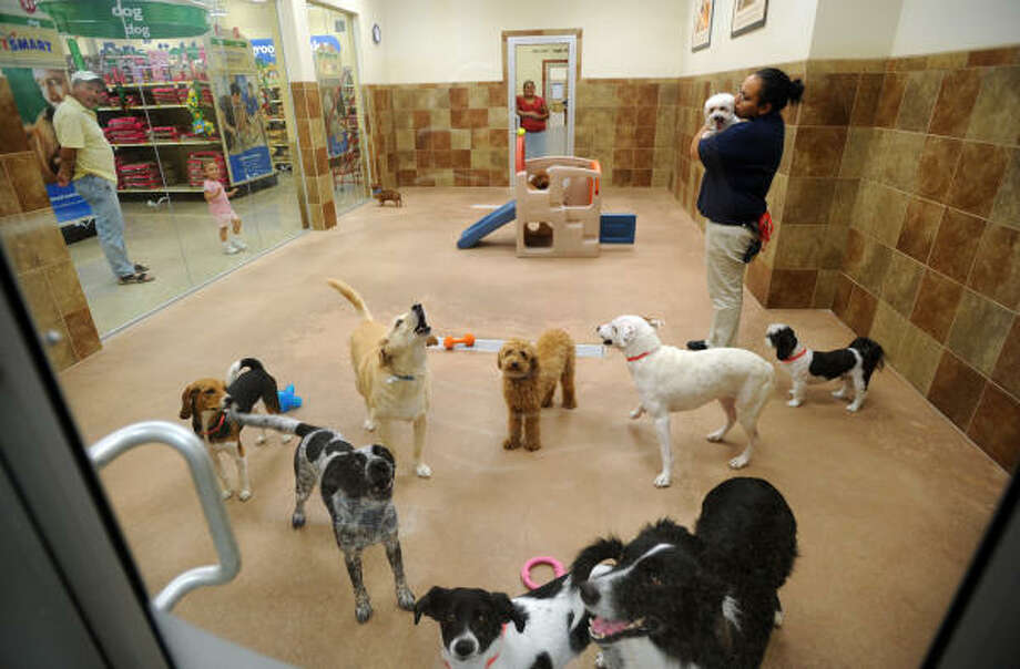 THE LUSH LIFE: Lucy DeVore attends to guest dogs inside the small doggie day camp at the PetsHotel inside Petsmart at 9718 Katy Freeway. The hotel is open 24 hours a day, every day of the year. Photo: Thomas Nguyen, For The Chronicle