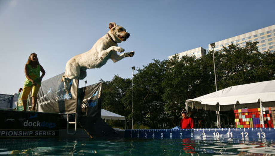 A dog takes a practice jump before the start of the Dock Dogs competition at Discovery Green. Photo: Michael Paulsen, Chronicle