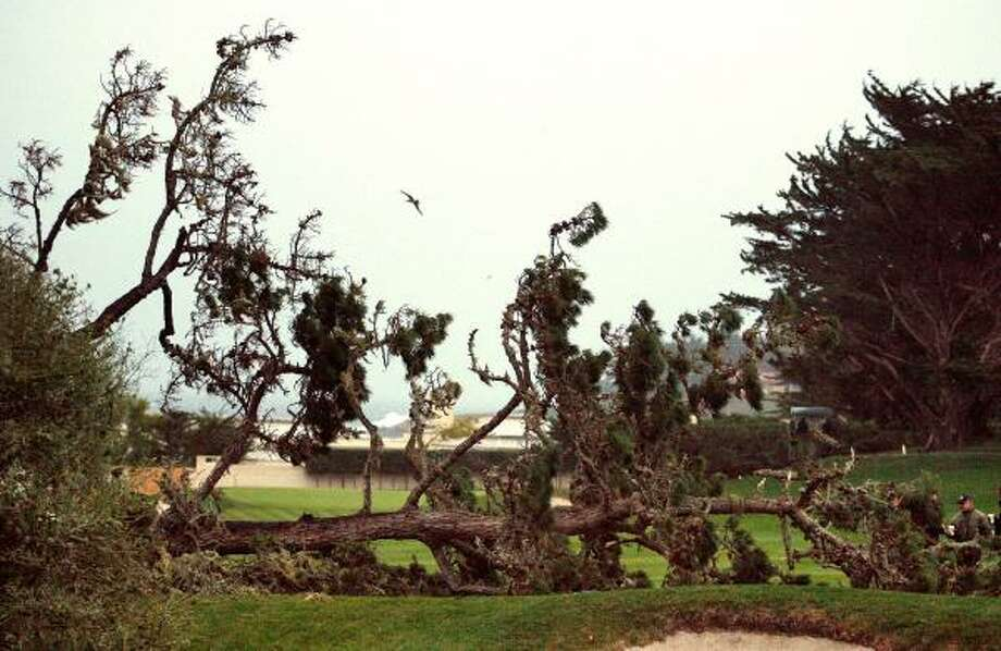 A large pine tree fell over the third-hole fairway during a strong winter storm that delayed the final round of the AT&T Pebble Beach National Pro Am. Photo: Vern Fisher, AP