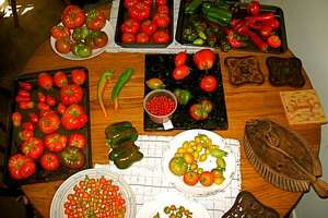 BACKYARD MARKET: A great range of tomatoes and peppers can be grown from seed that is easy to save.