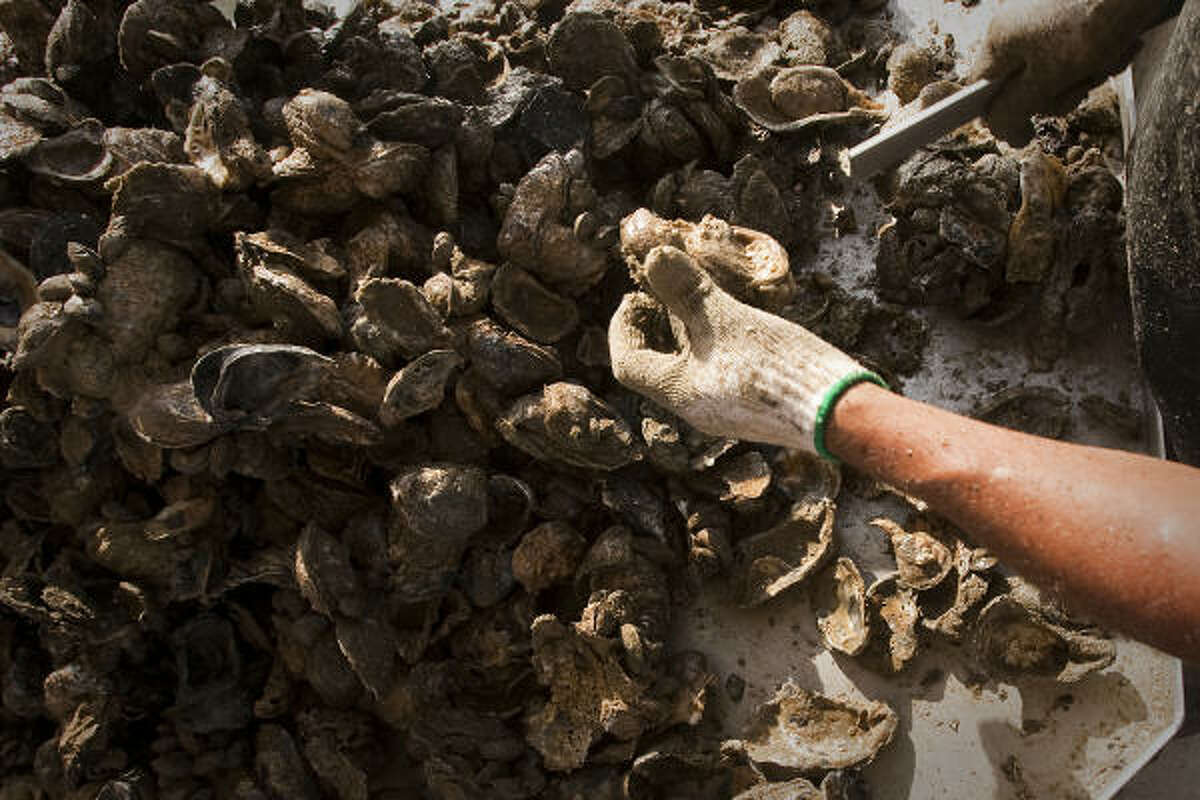 Alejandro Muniz culls oysters aboard Jeri's Seafood oyster boat Miss Britney on a reef in Galveston's East Bay.